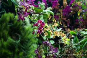 Gardens by the bay Orchid Fest 2016 2016-08-05 -10
