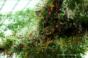 Gardens by the bay Orchid Fest 2016 2016-08-05 -4