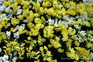 Gardens by the bay Orchid Fest 2016 2016-08-05 -6