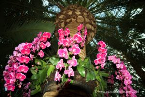 Gardens by the bay Orchid Fest 2016 2016-08-05 -7
