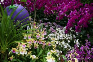 Gardens by the bay Orchid Fest 2016 2016-08-05 -8